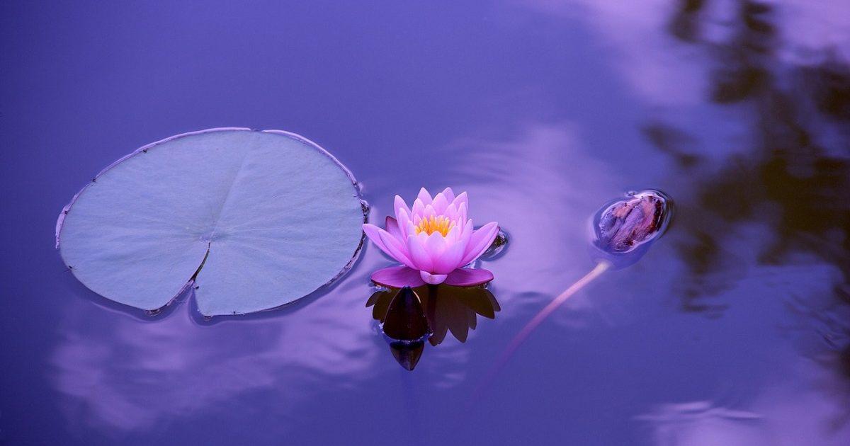 禅から学ぶ仕事効率化