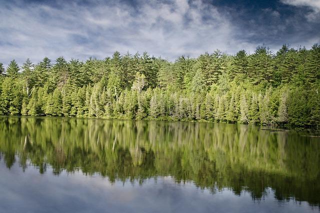 なっちん占い・木と水