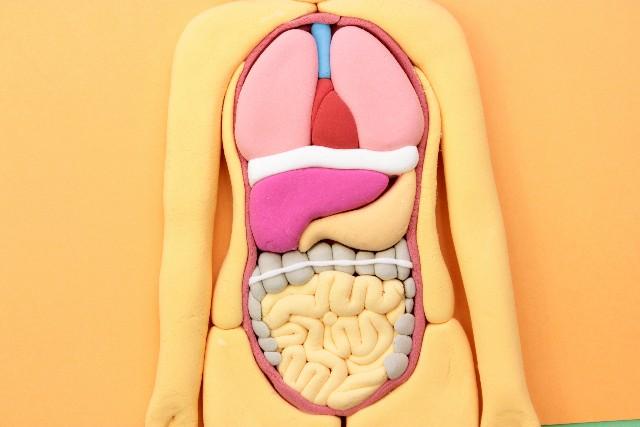 腸と脳とスピリチュアル
