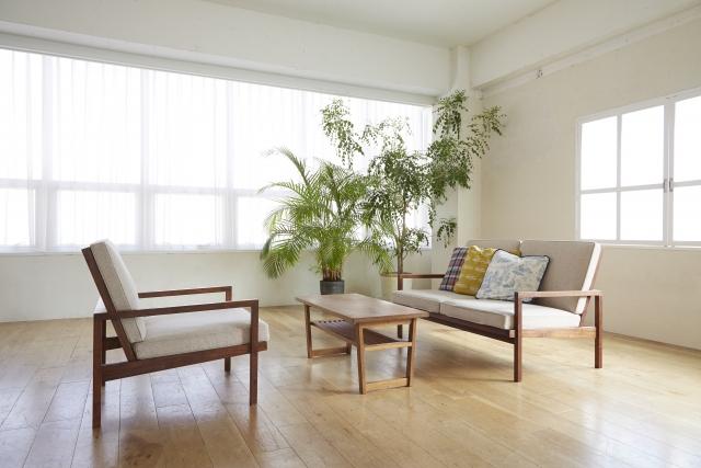 家の風水、観葉植物はどこに置く?
