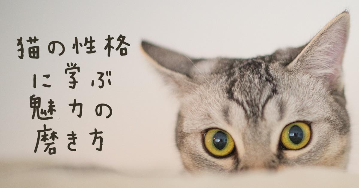 猫の性格の魅力