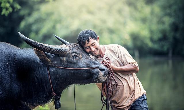 牛を捕まえて食べたい?