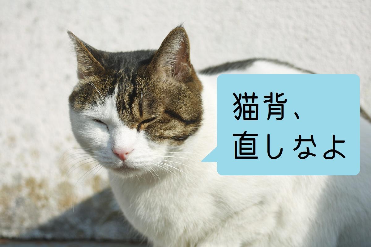 猫背直しな