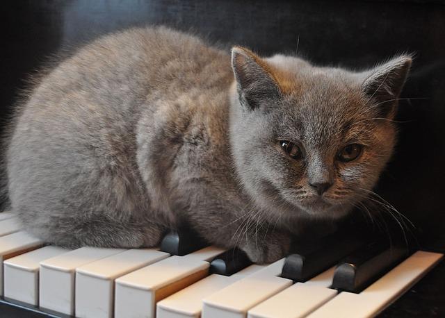 みんながやってるからピアノやりたいのにゃ!