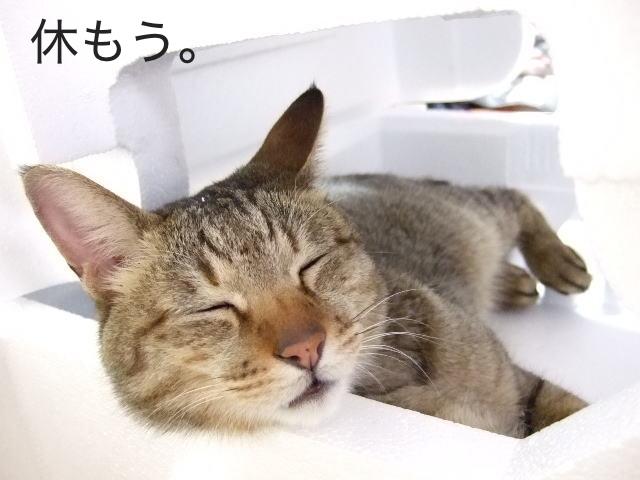 人生に疲れたら、休もう。