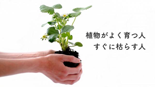 植物がよく育つ人