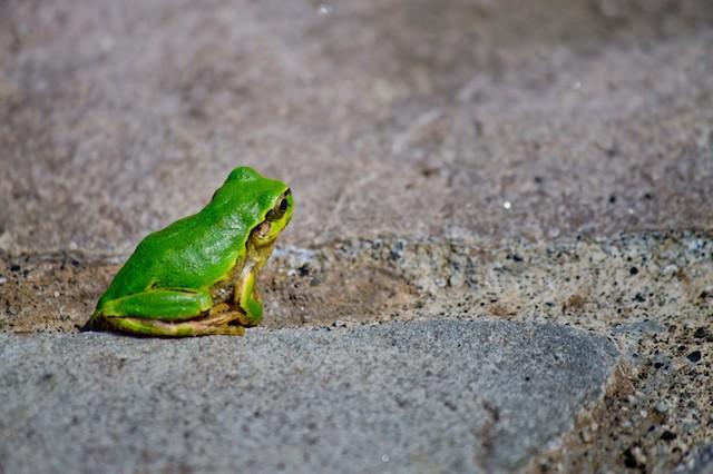 蛙化現象を起こすトラウマ
