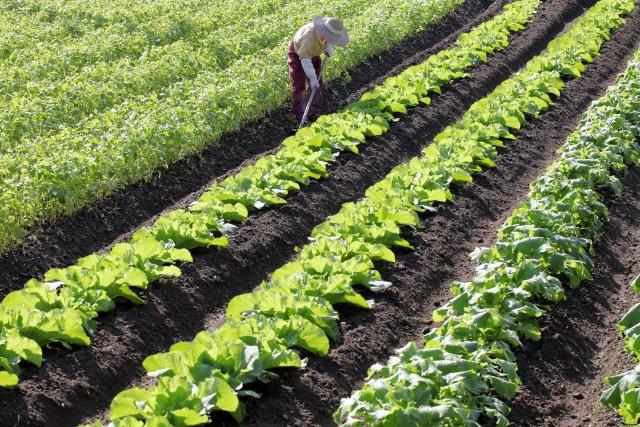 農家の畑仕事